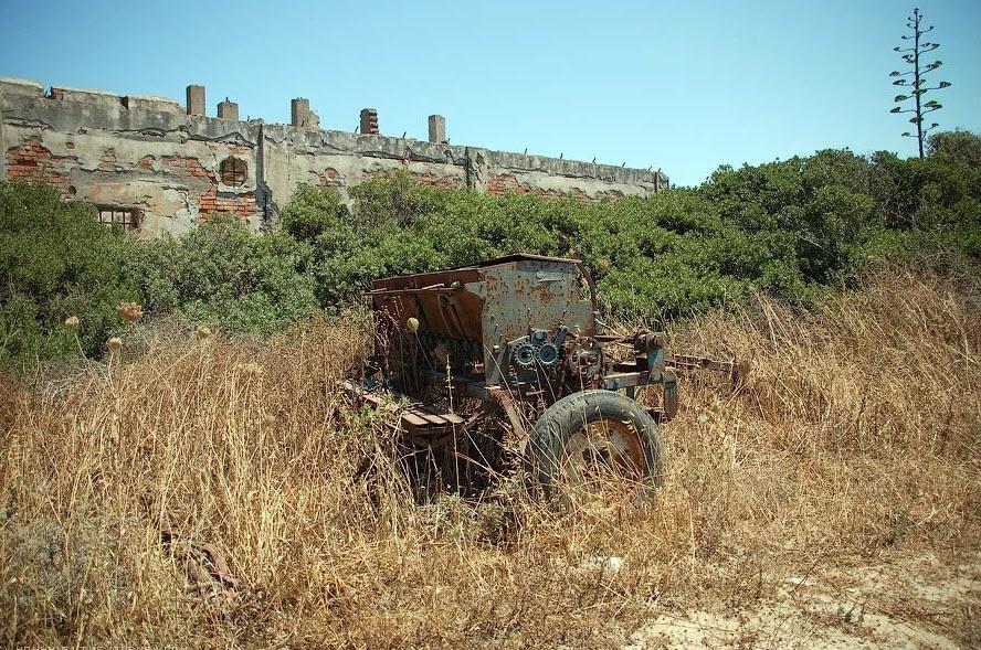 Заброшенные сельхоз поля